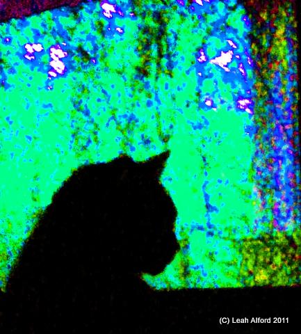 2799LB silhouettecolor3-003