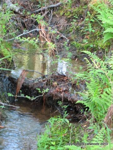 A tributary, creek beauty in miniature