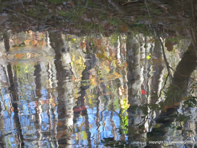 Festive reflecting creek