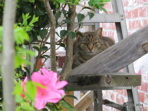 Madame Curious likes scaffolding
