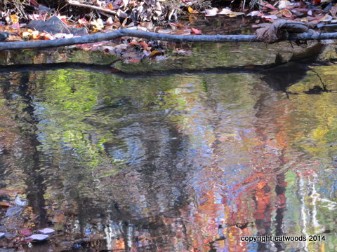 Magic reflecting creek