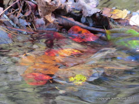 Leaves and sweet waters