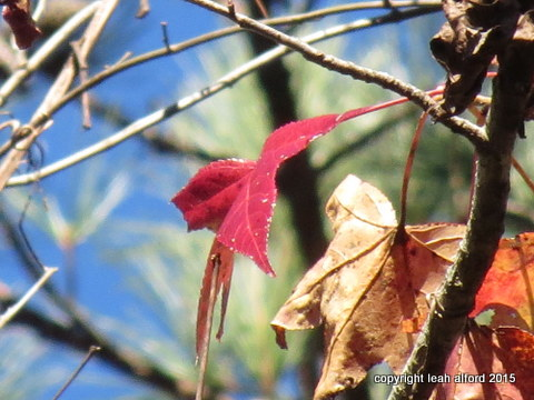 Reds look redder when the sun is brighter