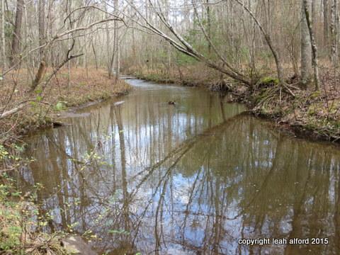 December 19th long view, creek