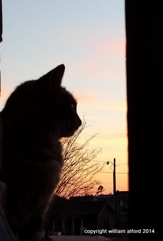 She's a watchful kitty, that Madame Curious
