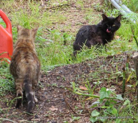 Jack and Madame Curious