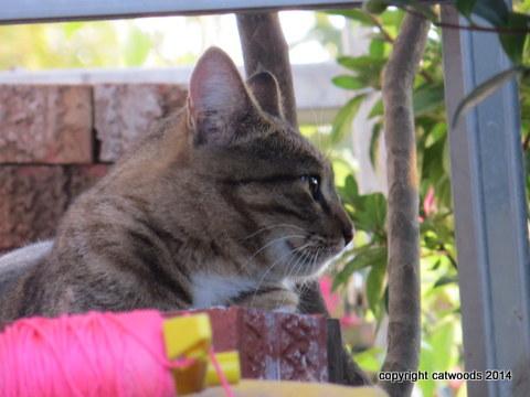 Comfortable Porch Cat