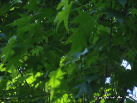 Extreme leafy calm