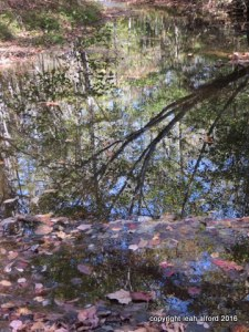 Upstream densities
