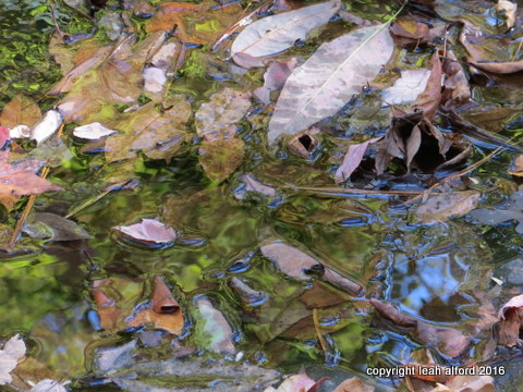 Gathering in the shallows