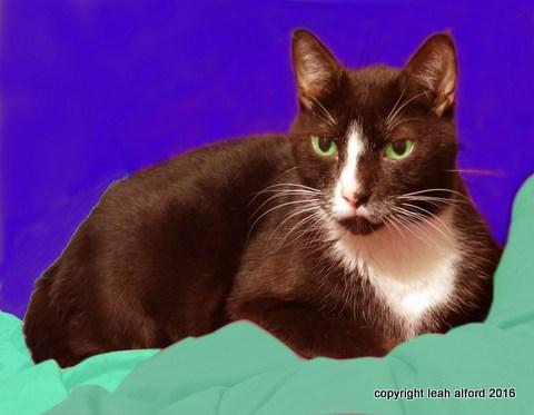 Bud, the grand editing cat