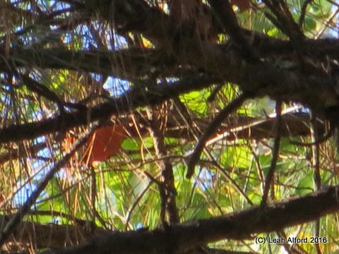 Faraway treetop
