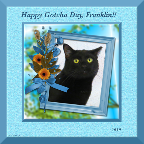 Franklin gotcha day card